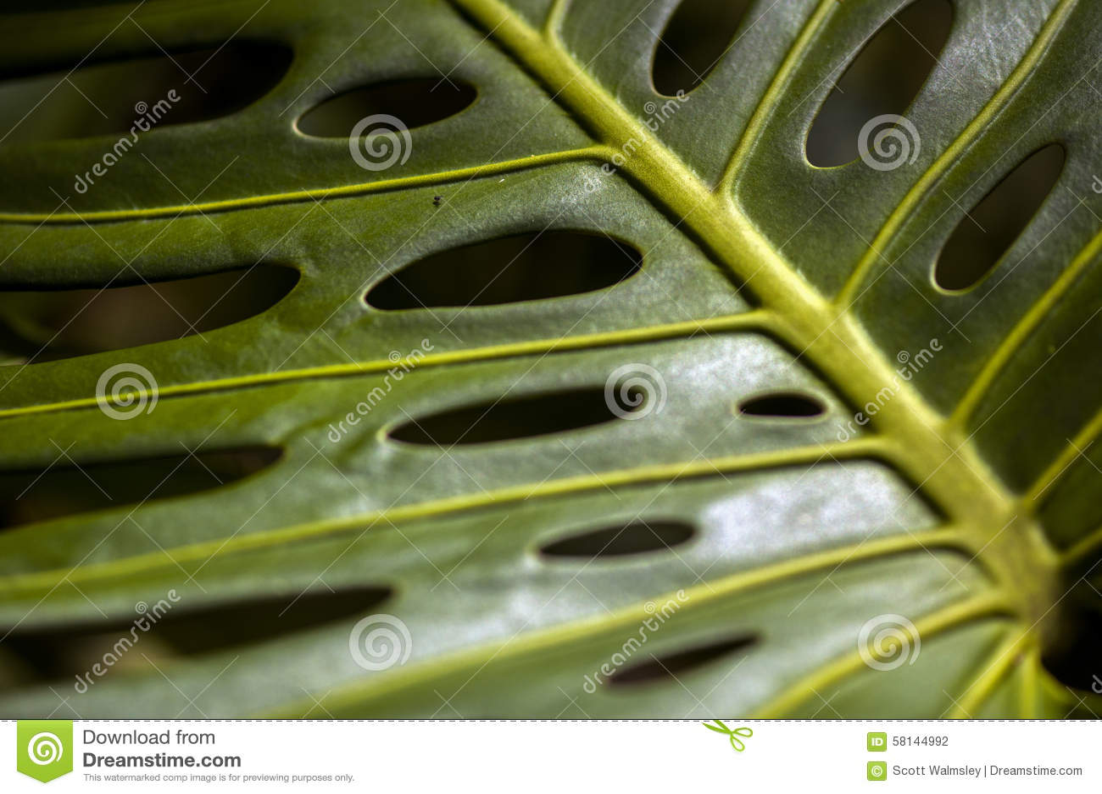 Slutet sköt upp av Philodendron