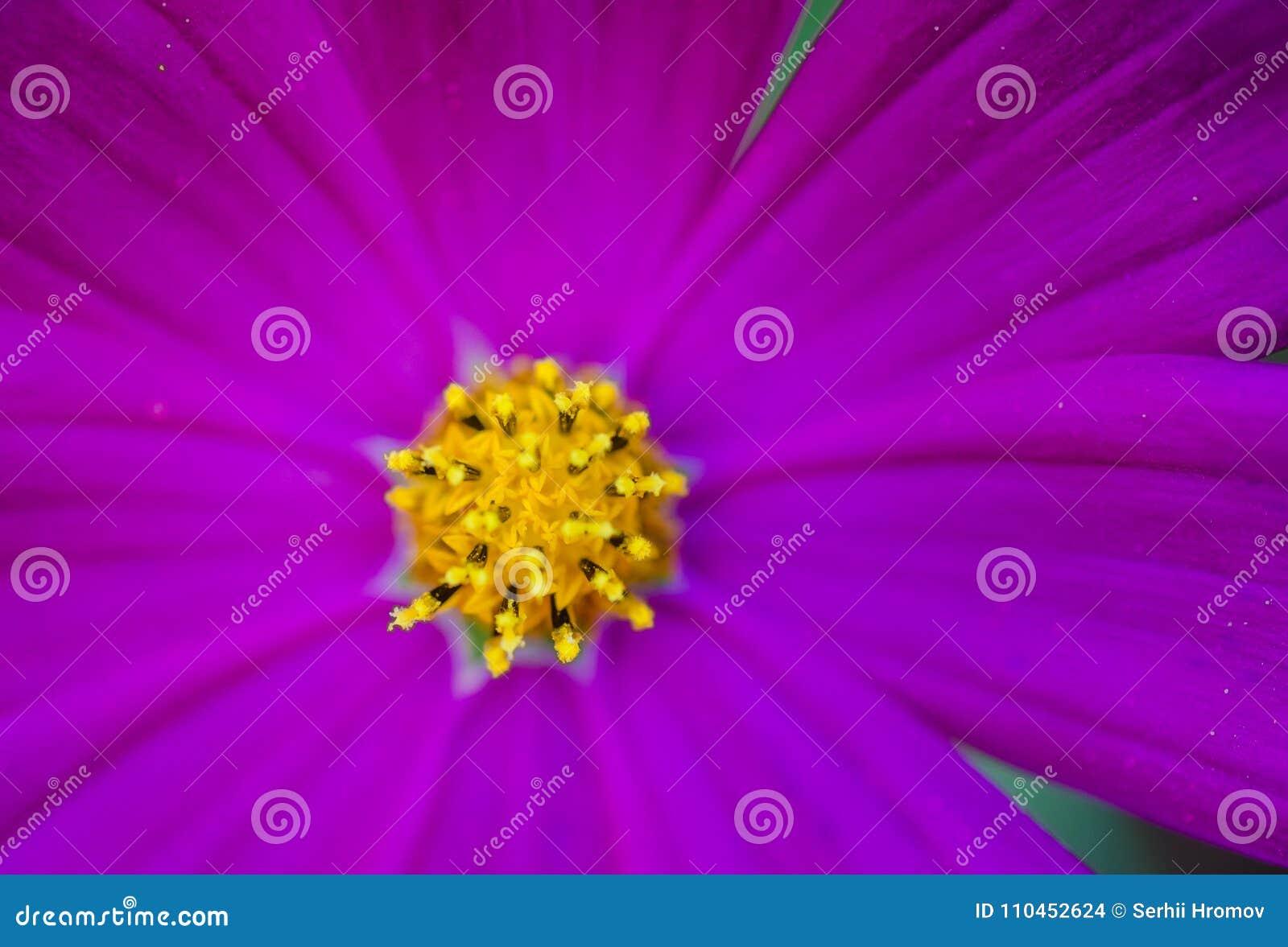 Slutet upp violet blommar bakgrund