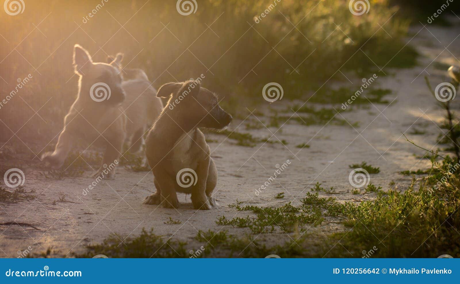 Små byrackavalpar spelar i en äng
