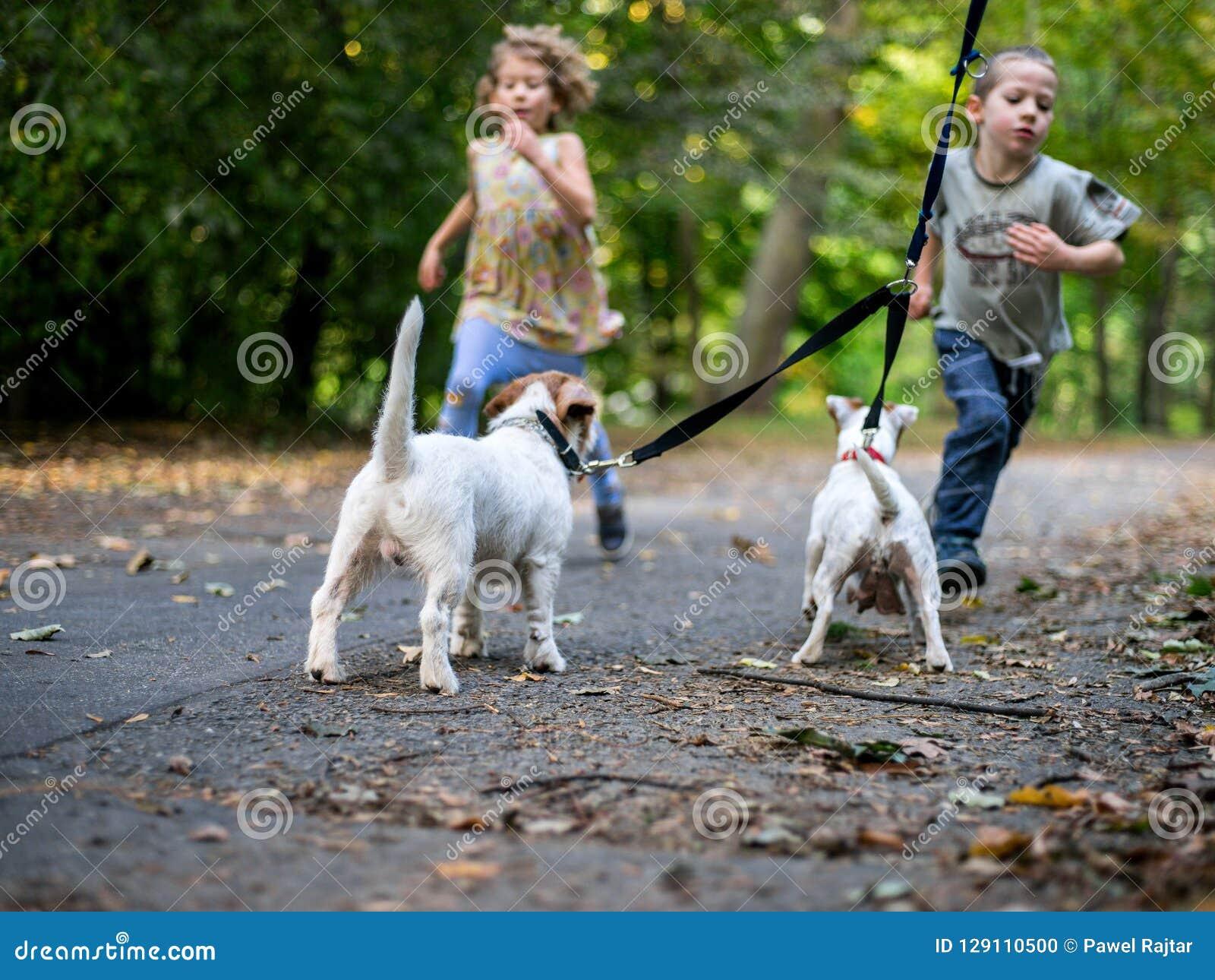 Små caucasian ungar som kör runt om hösten, parkerar med hundkapplöpningen