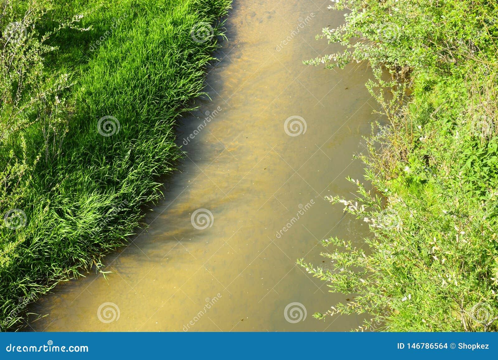 Små fiskar i den lilla floden i en solig dag för vår