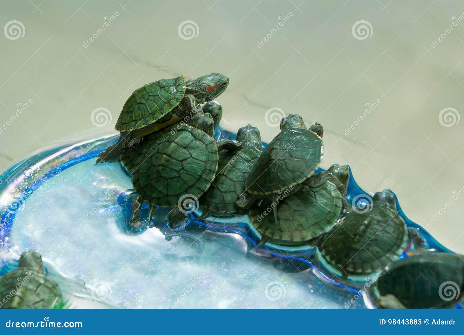 Små gröna sköldpaddor i en skyttel