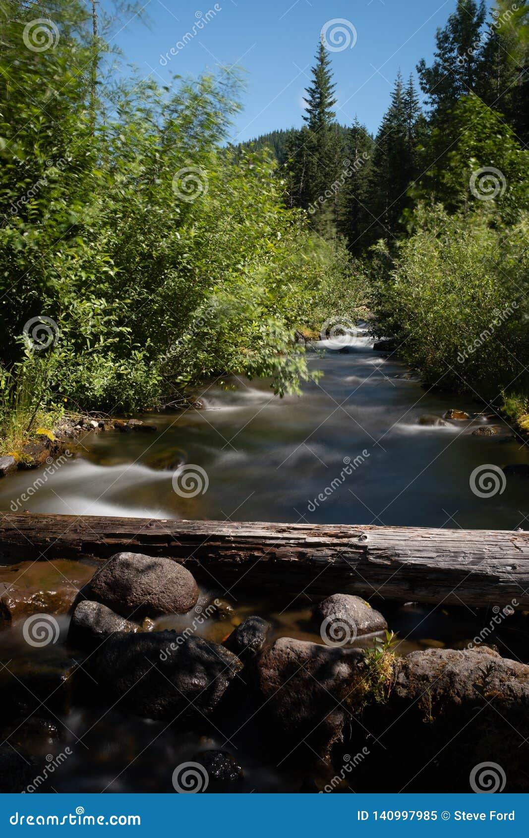 Små kaskader för en flod till och med skogen i nationell monument för Mt St Helens nära juni sjön, ståendeaspekt
