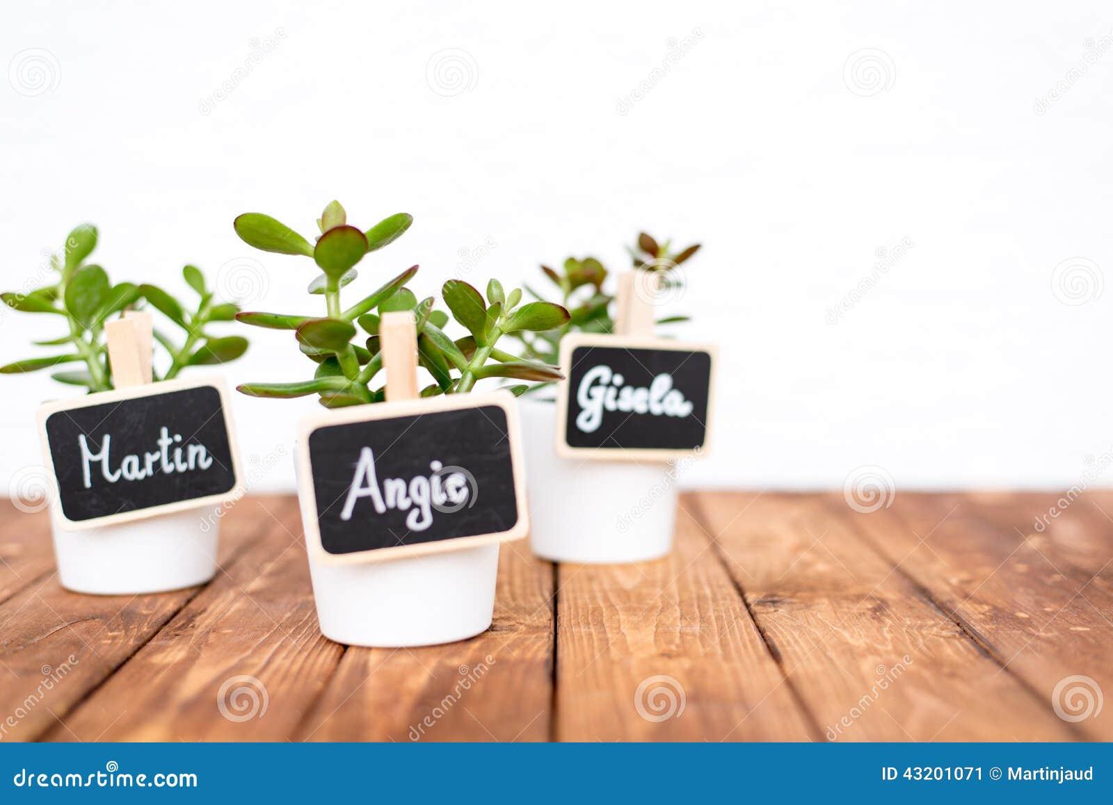 Download Små Krukväxter Med Känt Tecken Fotografering för Bildbyråer - Bild av växa, gulligt: 43201071