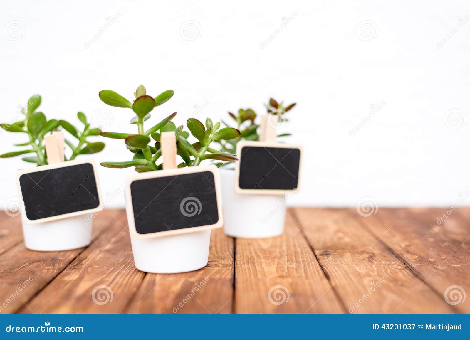 Download Små Krukväxter Med Tomma Kända Etiketter Fotografering för Bildbyråer - Bild av natur, växt: 43201037