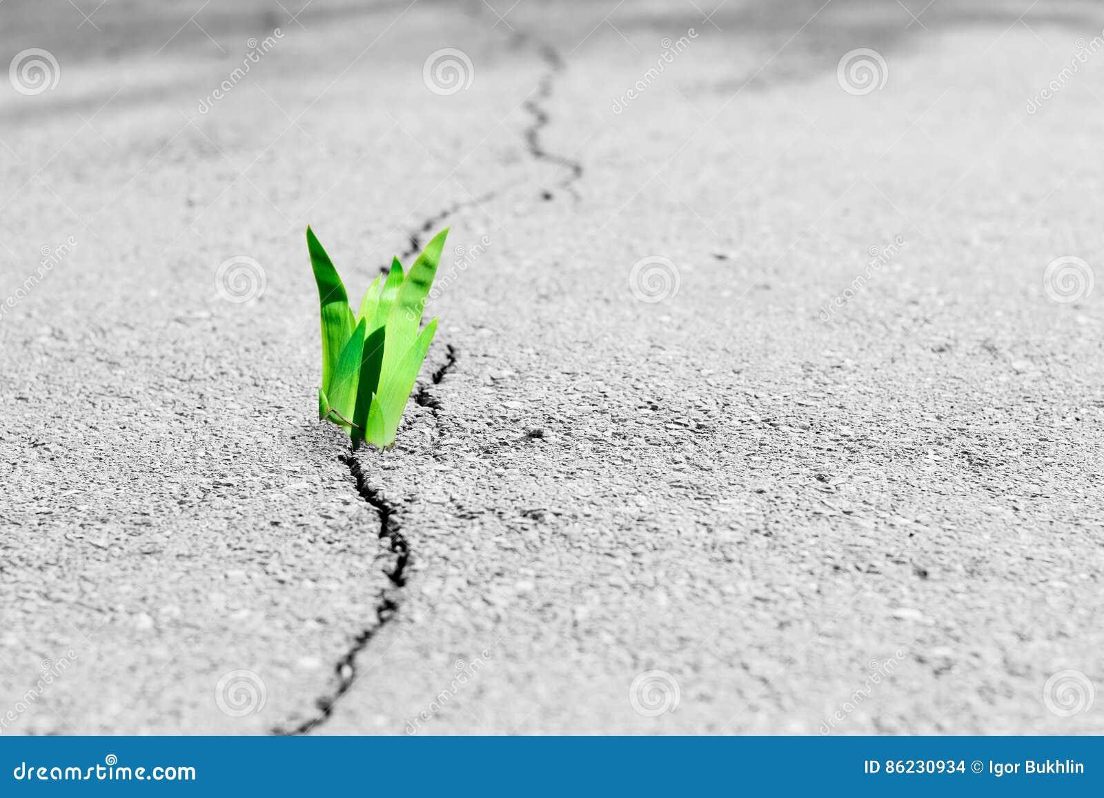 Små trädavbrott till och med trottoaren Den gröna grodden av en växt gör vägen till och med en sprickaasfalt
