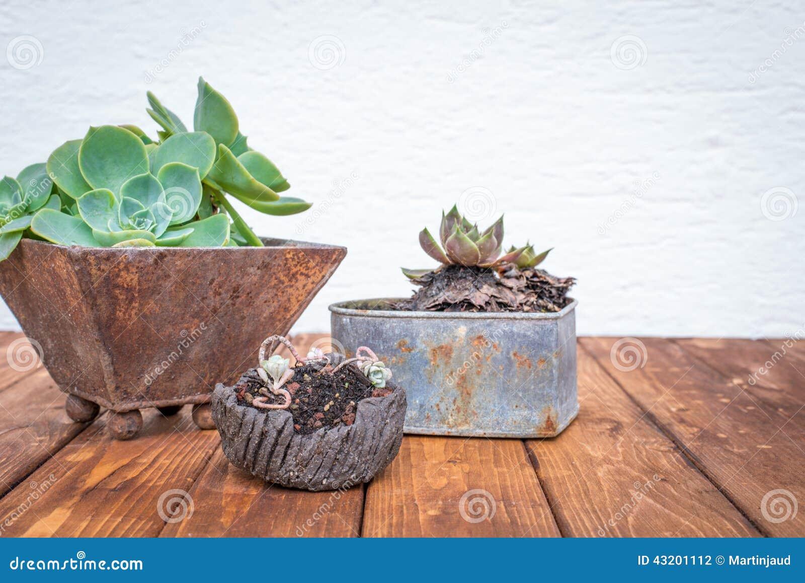 Download Små Växter I Rostiga Blomkrukor Arkivfoto - Bild av rostigt, odling: 43201112