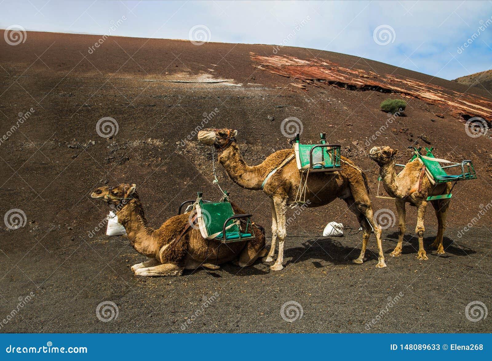 Smal husvagn p? den bruna sanden