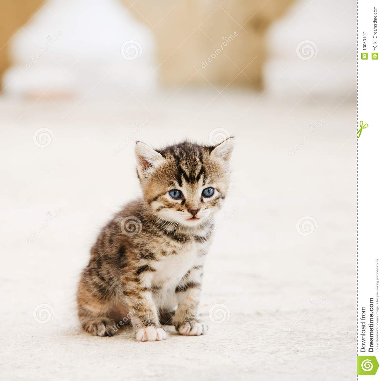 Small adorable kitten stock image Image of eyes fuzzy