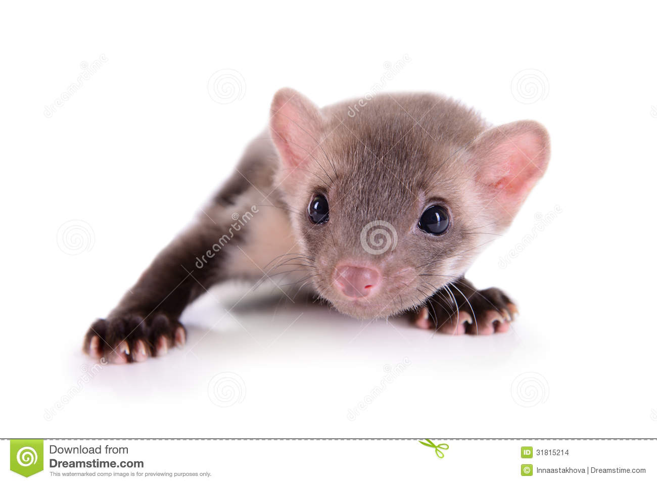 Small Animal Rodent Stock Images - Image: 31815214
