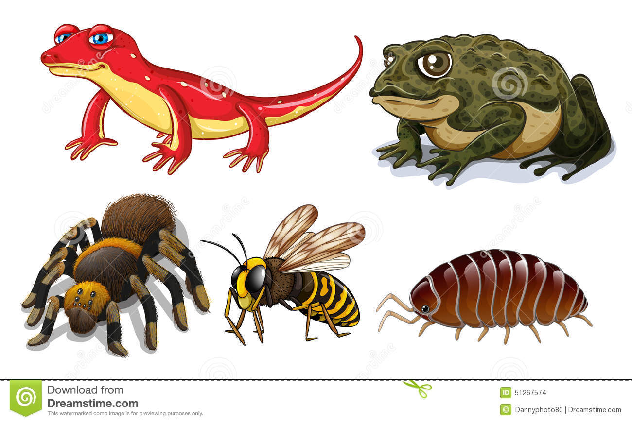 Small animals stock vector. Illustration of isolated - 51267574
