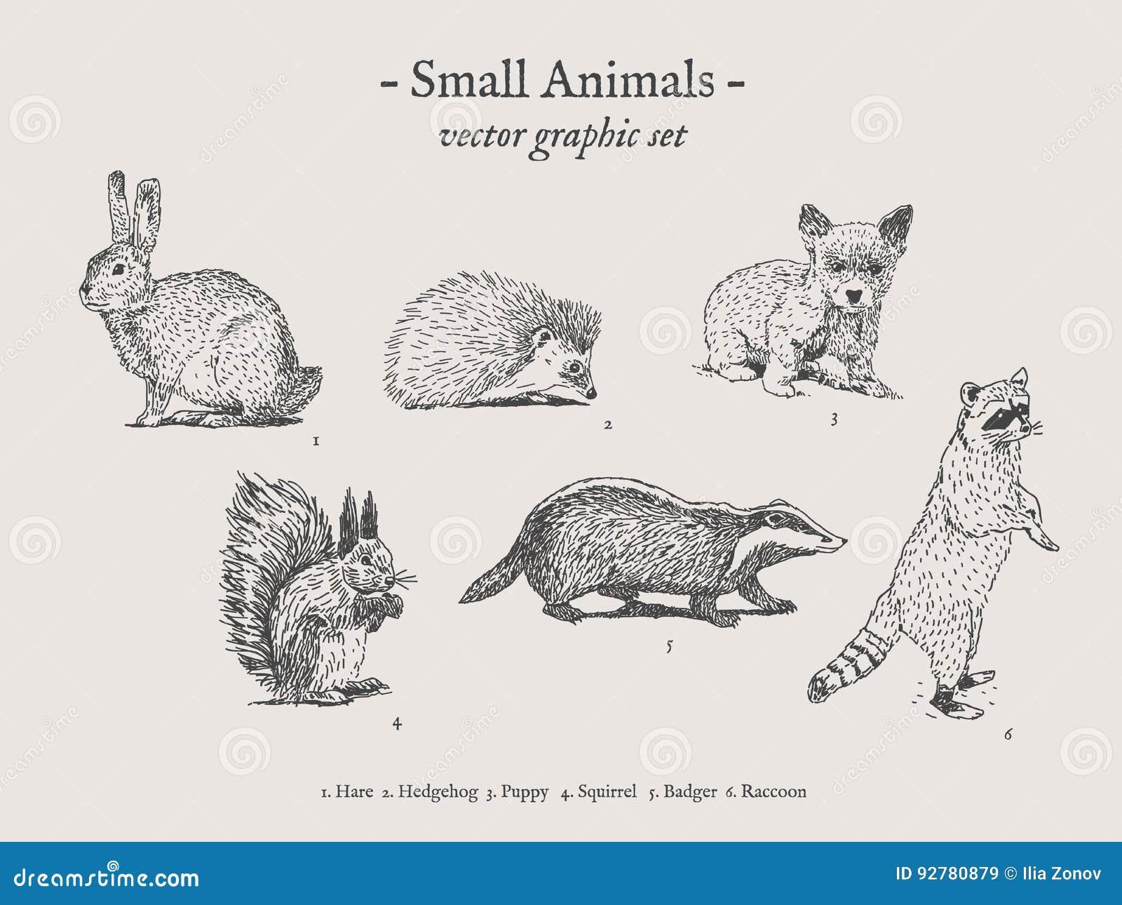 Small Animals Vintage Illustration Set Stock Vector
