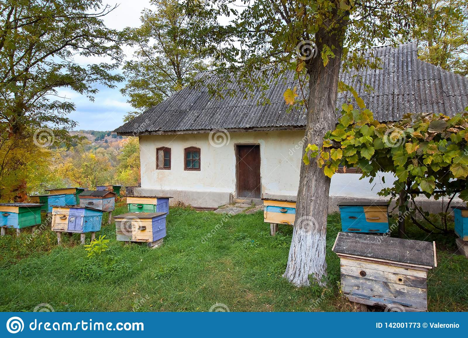Colored Bee Hives In An Apiary Stock Photo - Image of