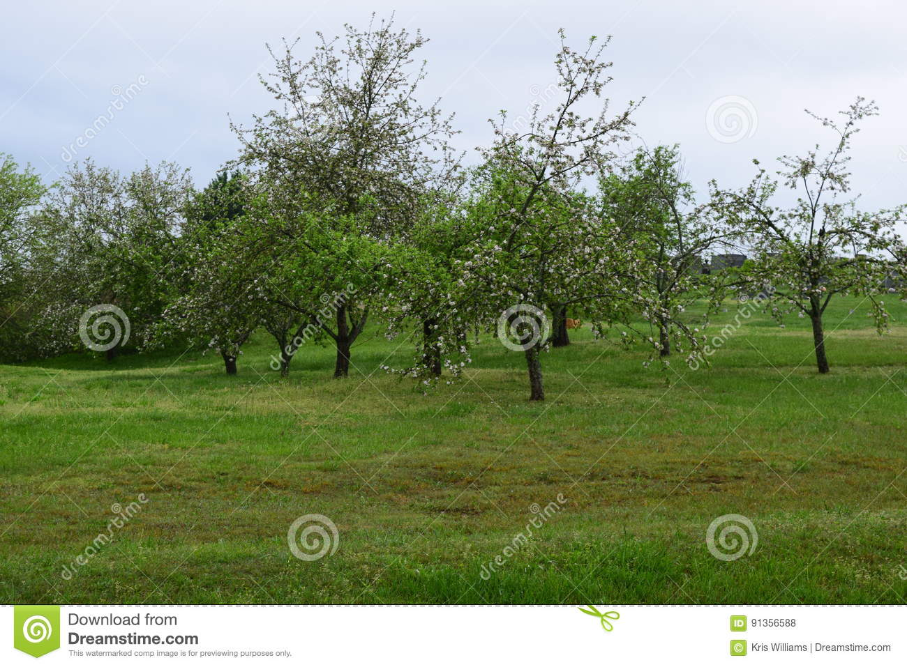 Small apple orchard