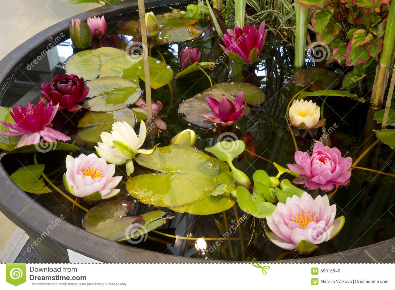 A small artificial pond in the garden stock photo image for Artificial pond water