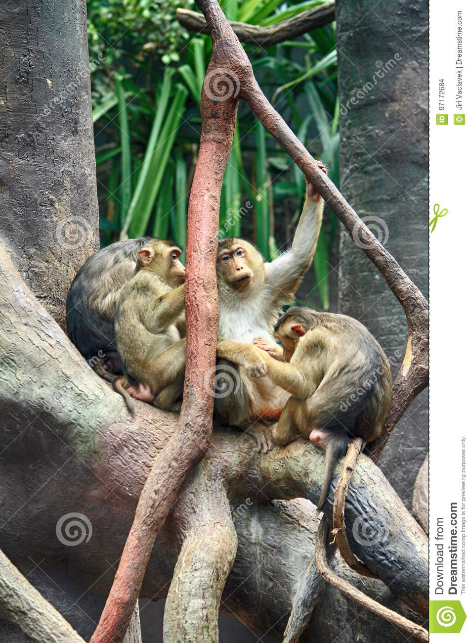 small baboons group