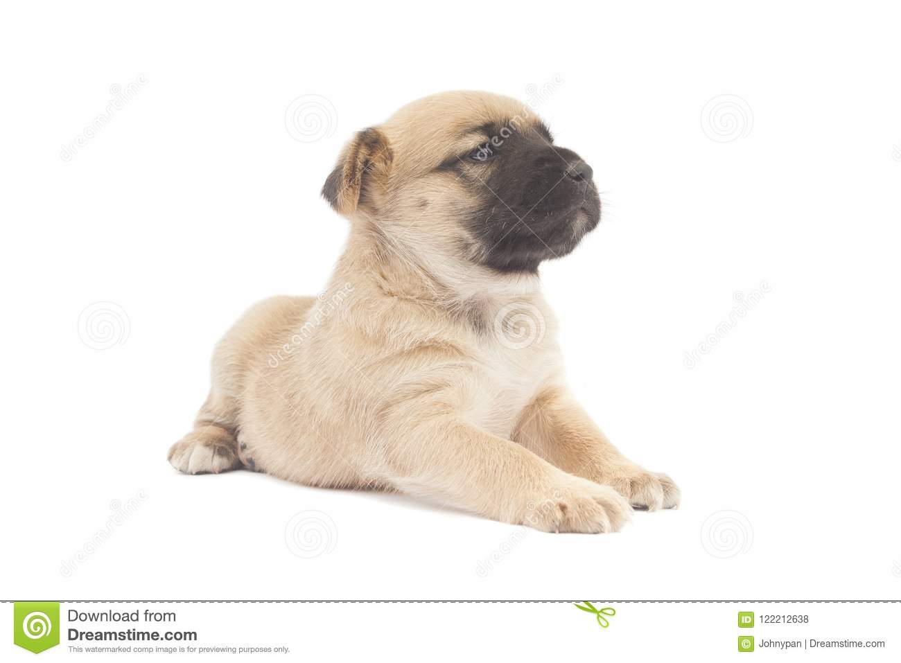 Small Baby Dog Or Puppy Looking Stock Photo Image Of Canine Looking 122212638