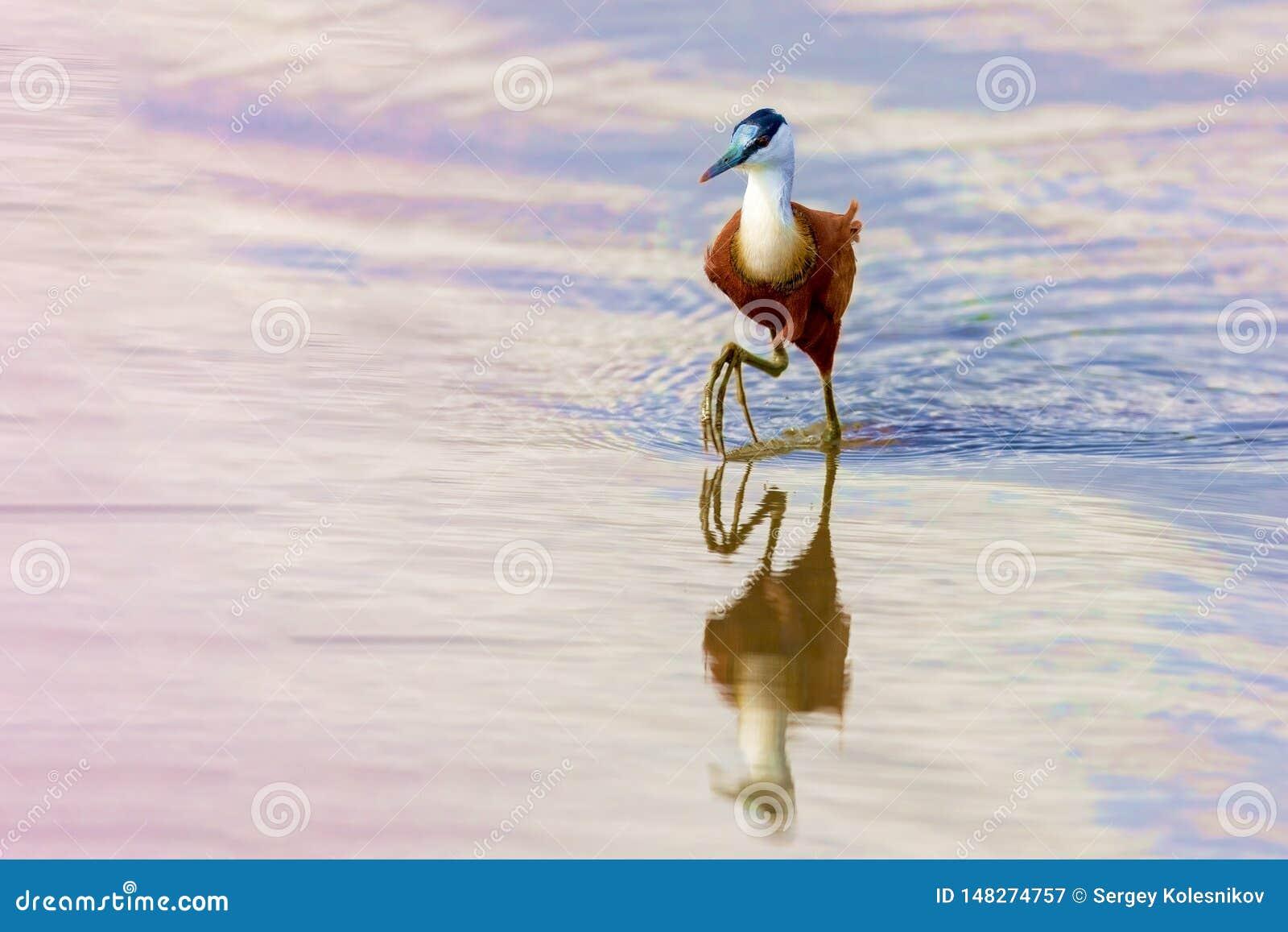 Bird hunts on the lake.