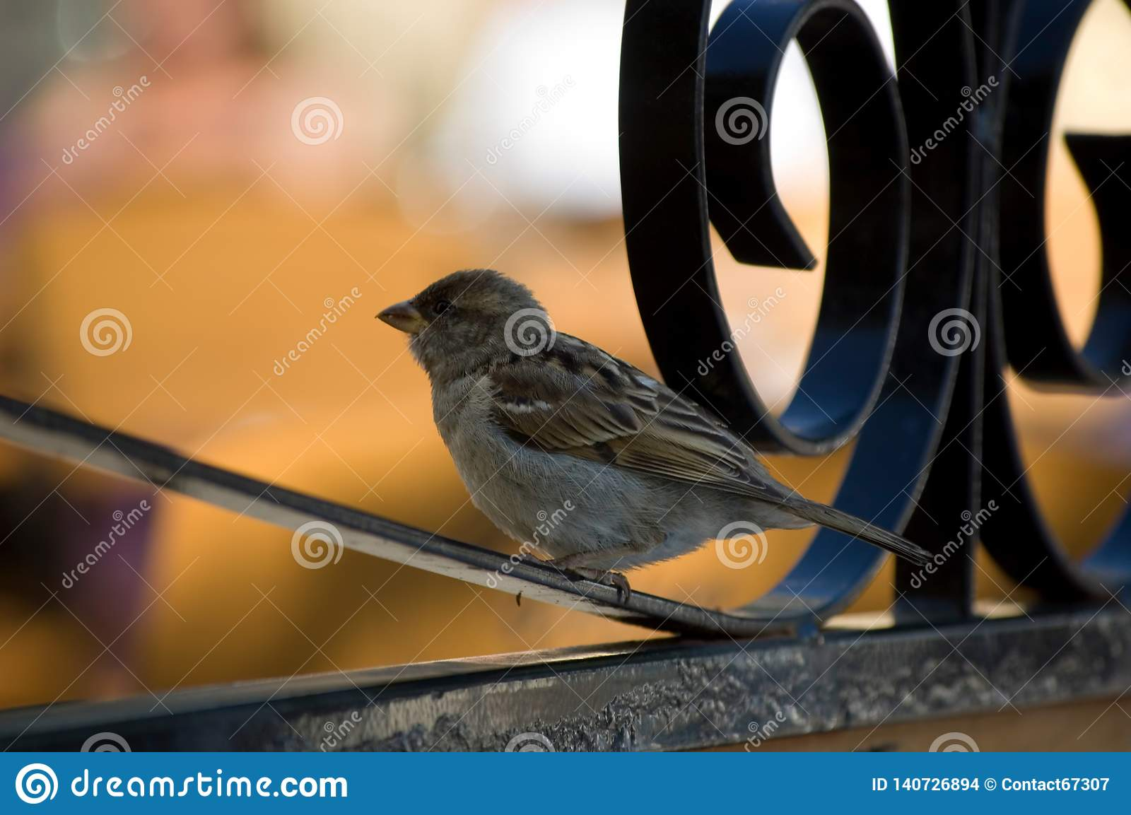 Small bird sitting on a fence