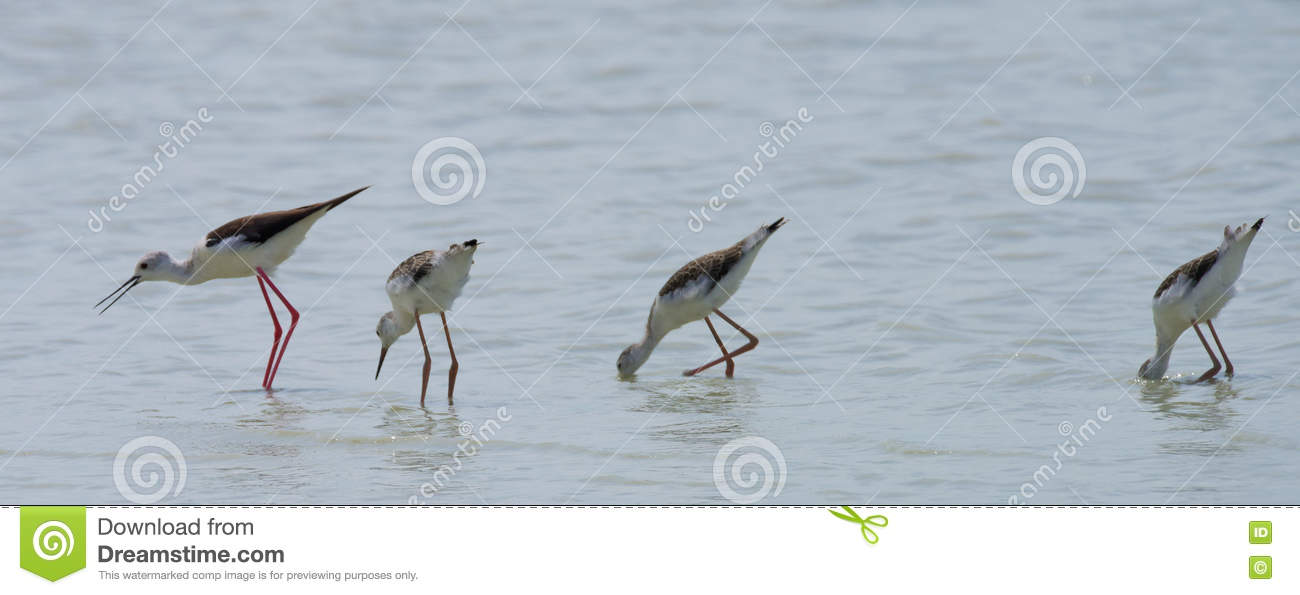 Small Bird With Slim Legs In Sea Royalty-Free Stock ...