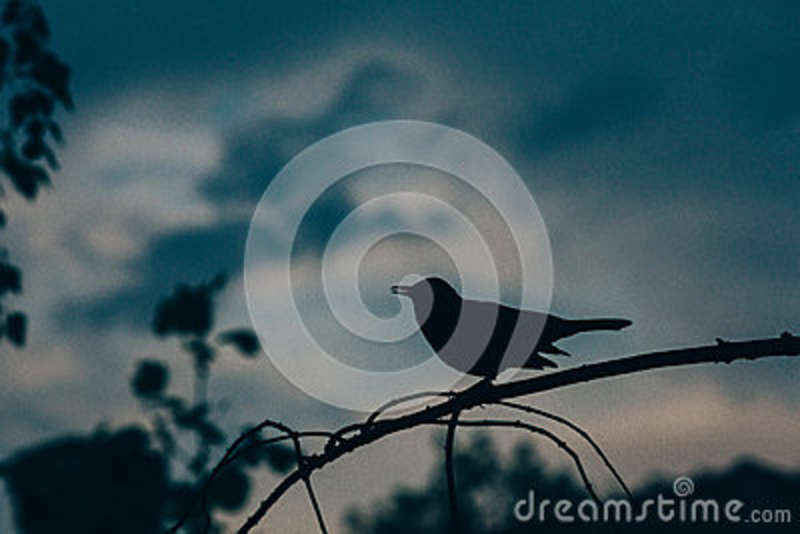 Download Small Bird On Tree Branch During Daytime Stock Photo - Image of bird, free: 83021092