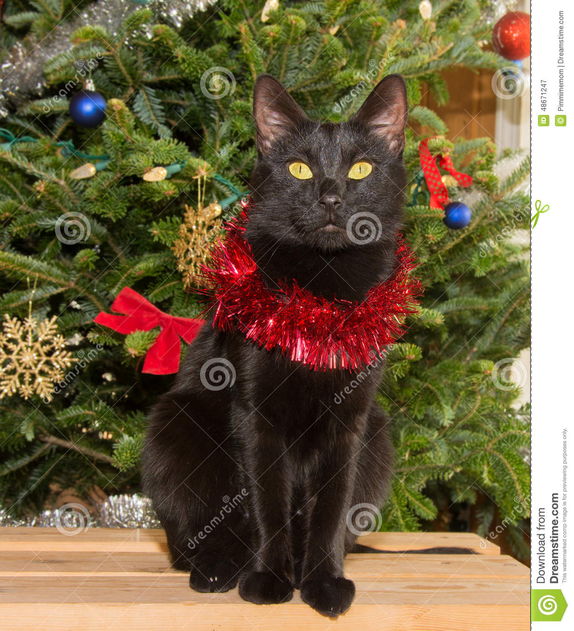 royalty free stock photo download small black cat in front of a christmas tree - Small Black Christmas Tree