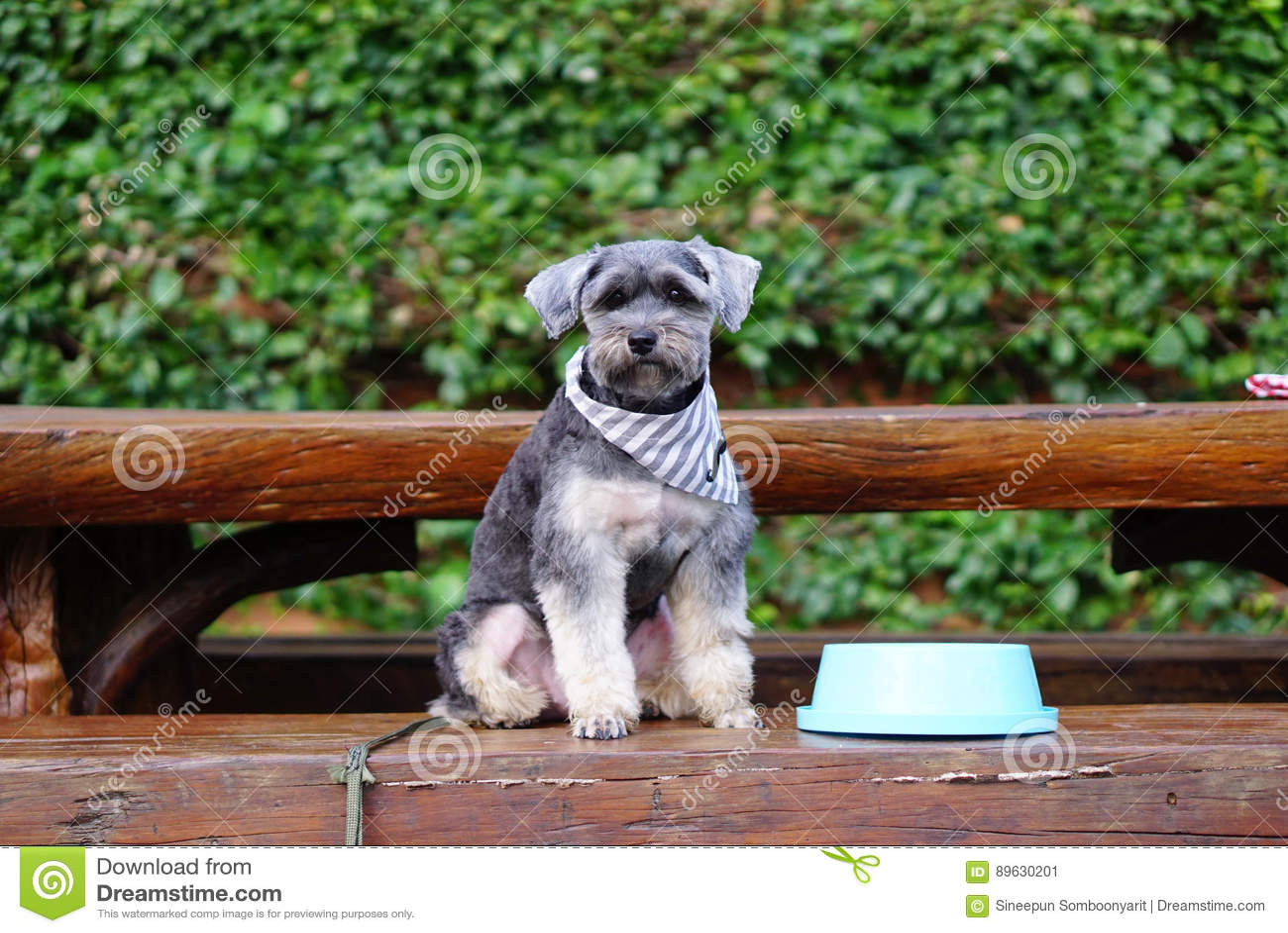 Awe Inspiring Small Black Dog Sitting On The Bench With Blue Bowl Stock Frankydiablos Diy Chair Ideas Frankydiabloscom