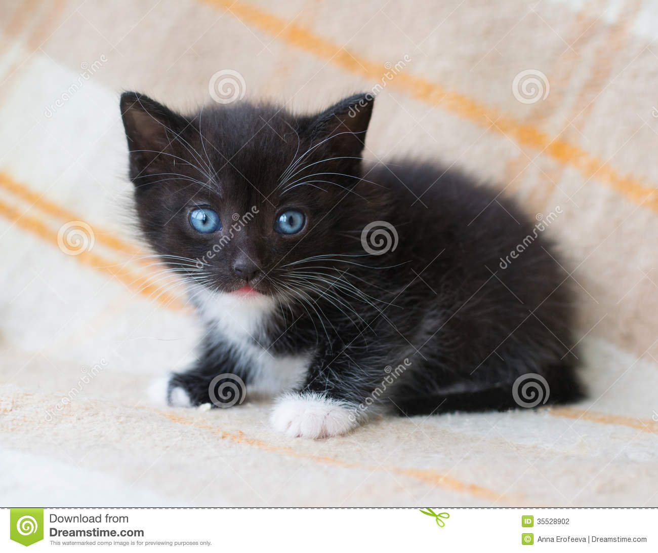 Fluffy Black Kittens With Blue Eyes Small Black Fluffy Kit...