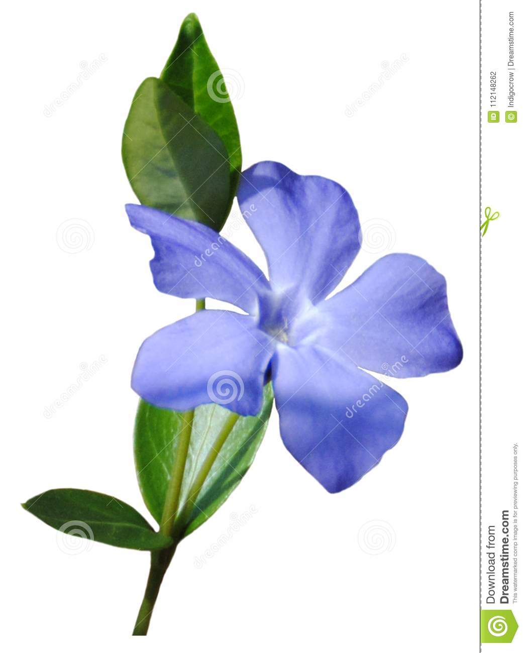 Small Blue Flower Stock Photo Image Of Pretty Natural