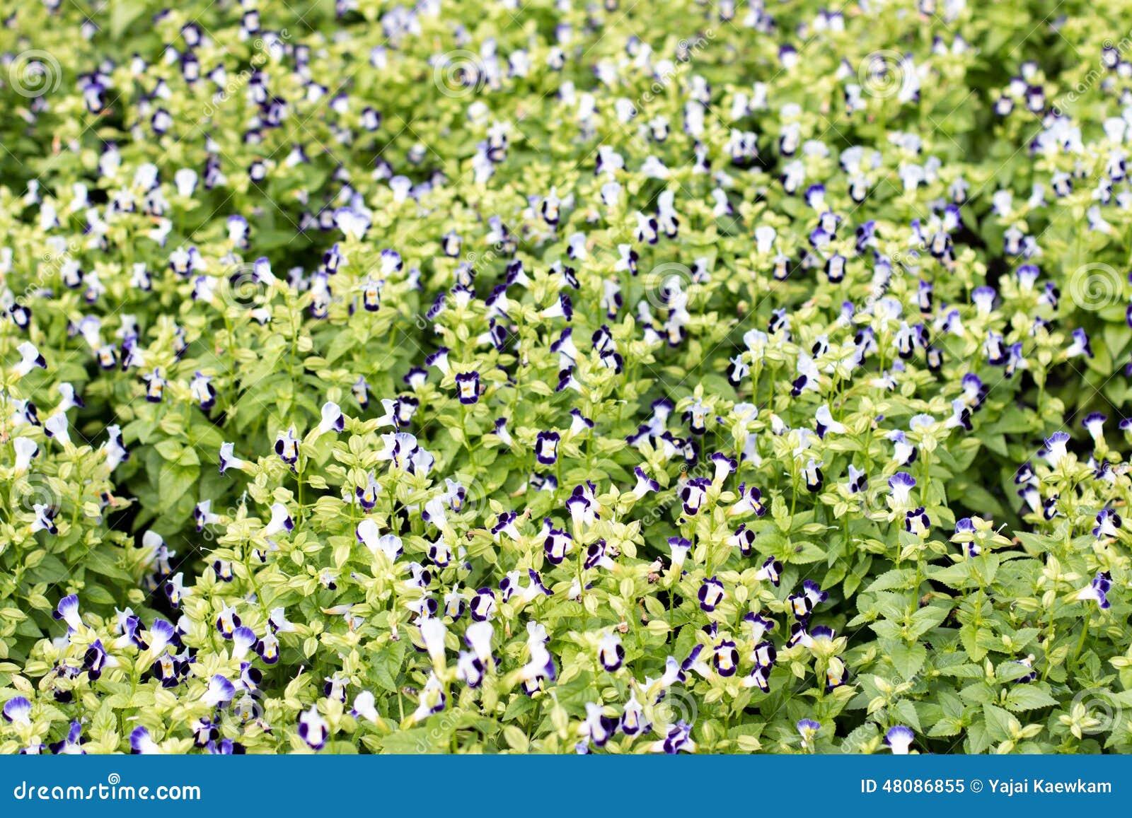 Small Blue Flower Shrub Stock Image Image Of Shrub Flower 48086855
