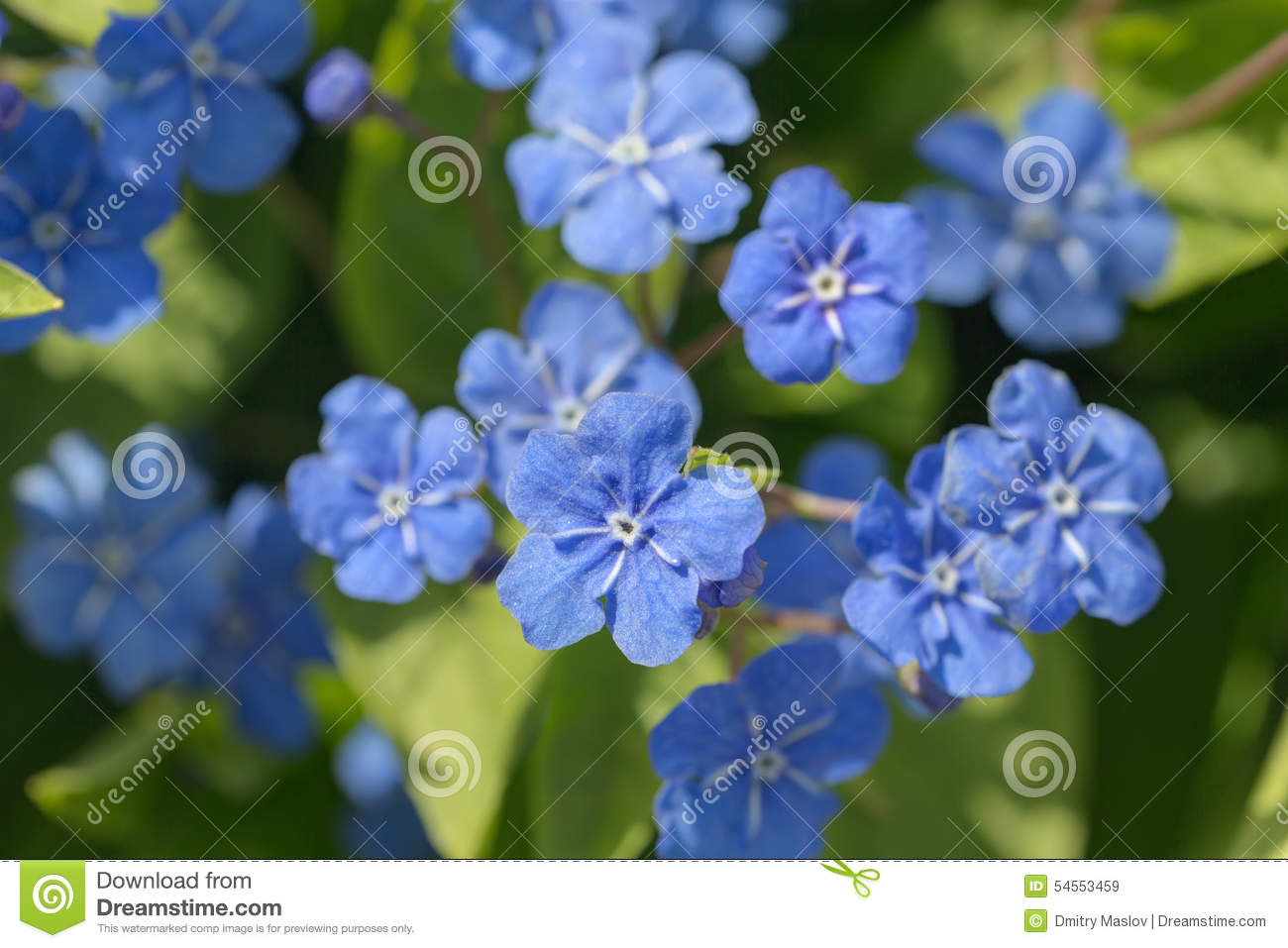 Small blue spring flowers stock photo image 84093588 small blue spring flowers royalty free stock images dhlflorist Choice Image