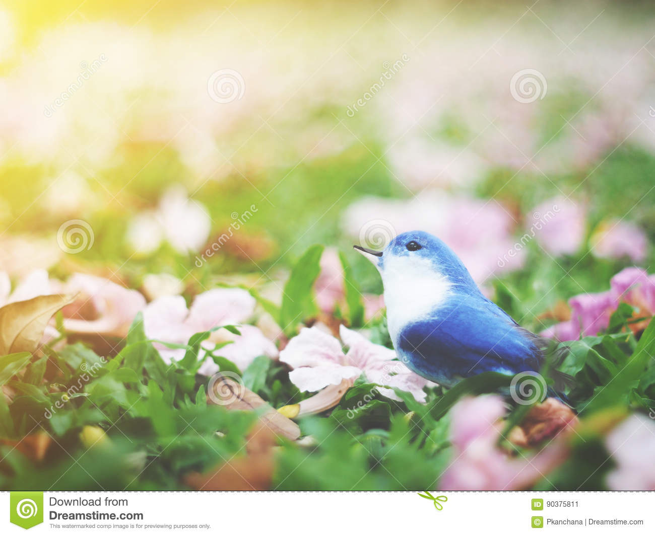 Small Blue And White Bird On Grass Ground With Pink Flowers Fall