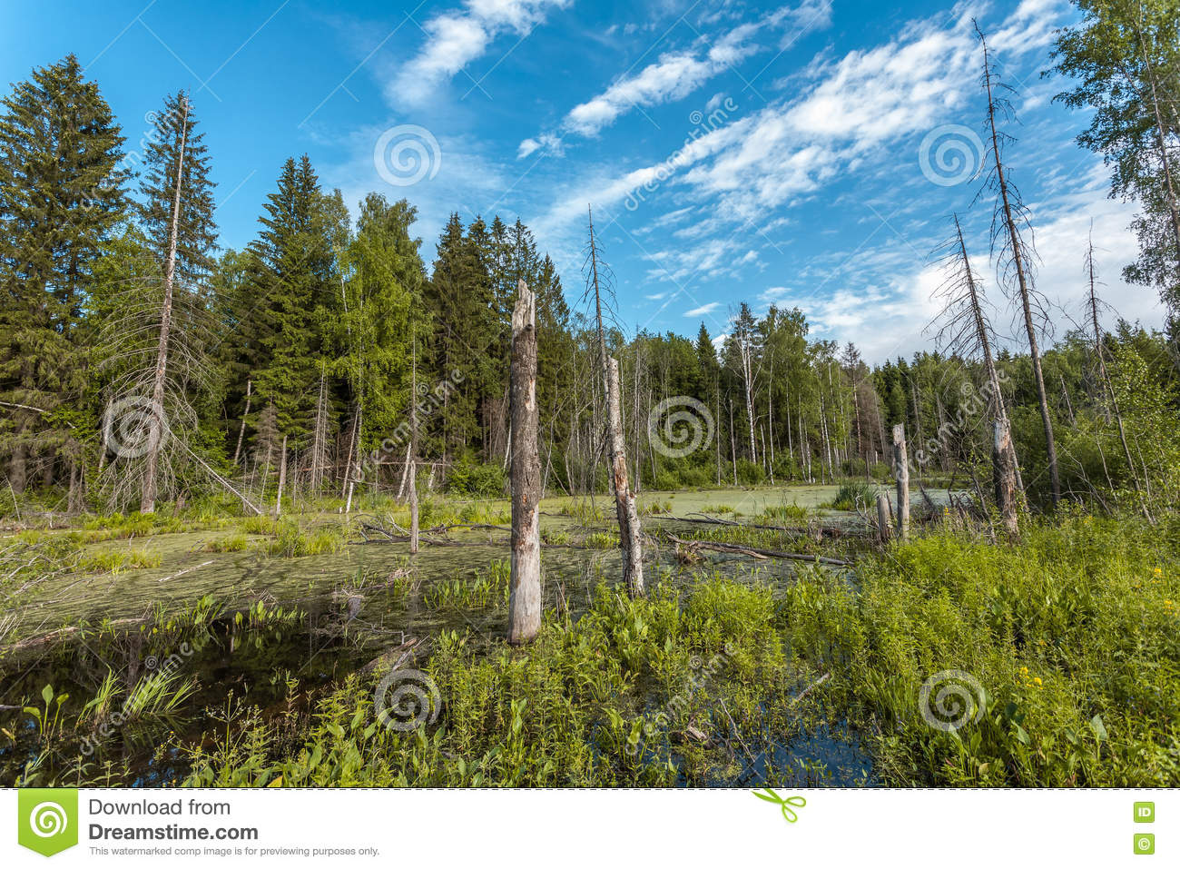 Small bog in the wood