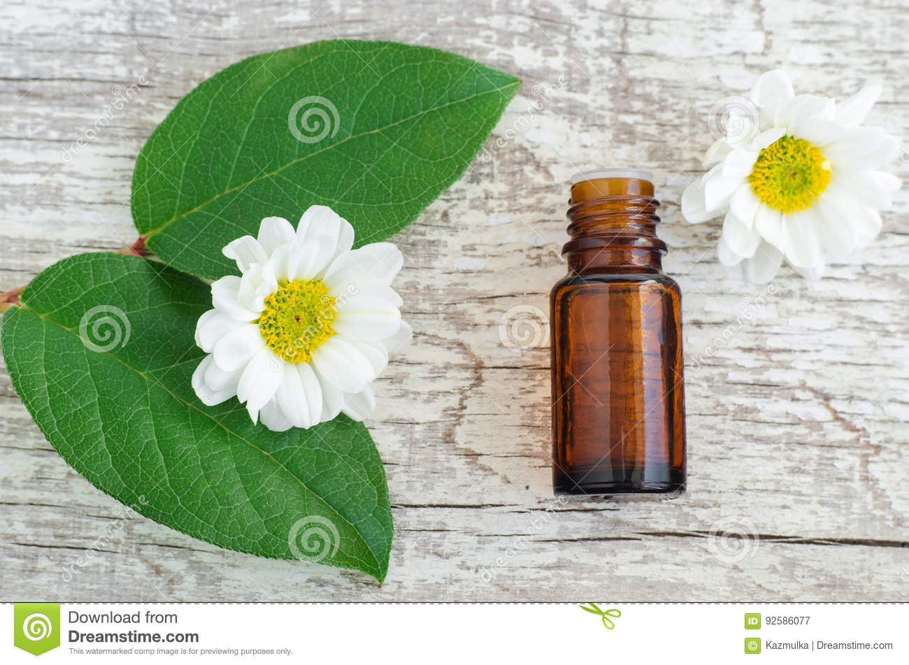 Small bottle of essential oil, fresh leaves and chamomile flowers over wooden background. Top view, copy space. Aromatherapy and s