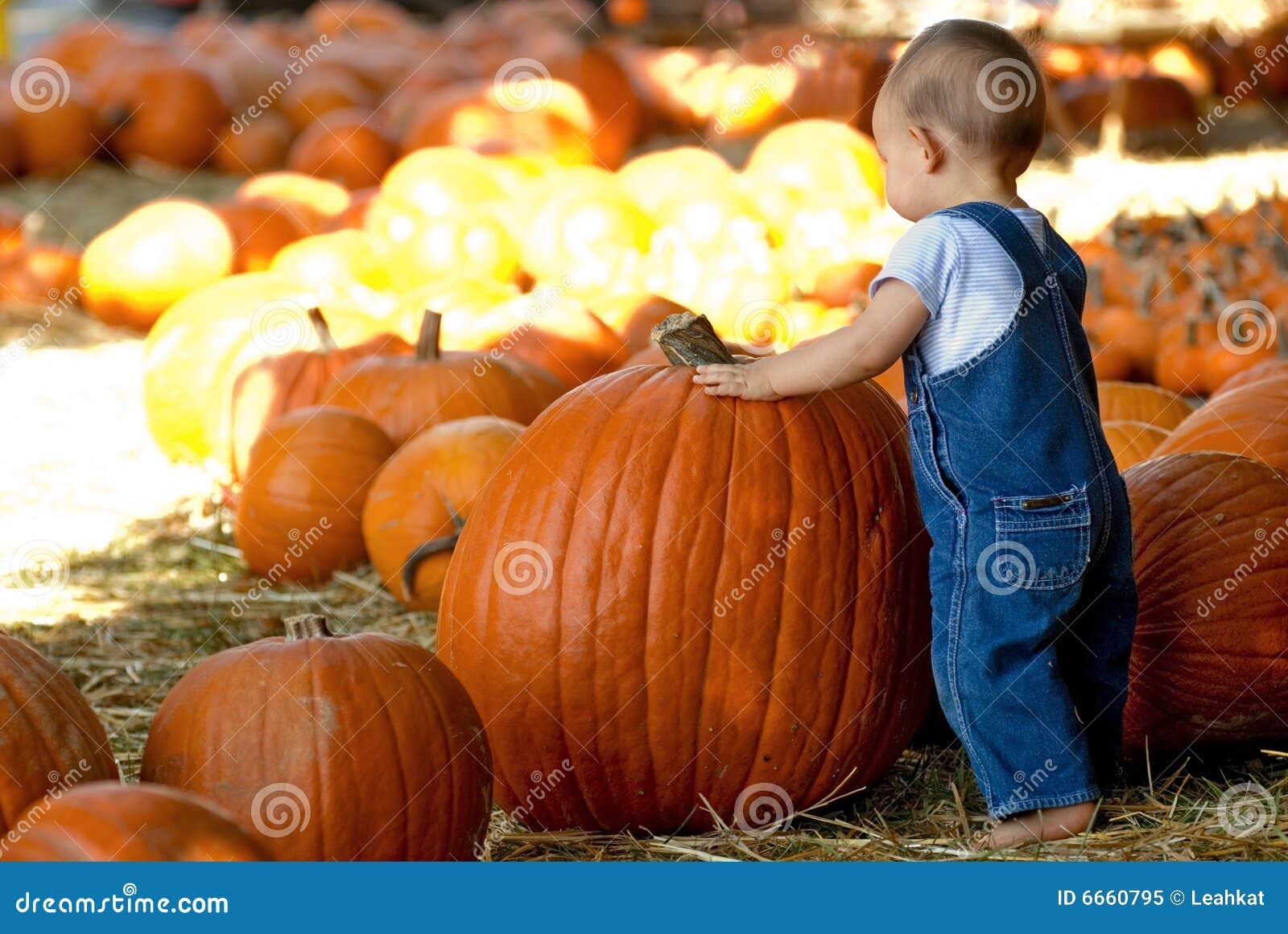 Small Boy Finds Large Pumpkin