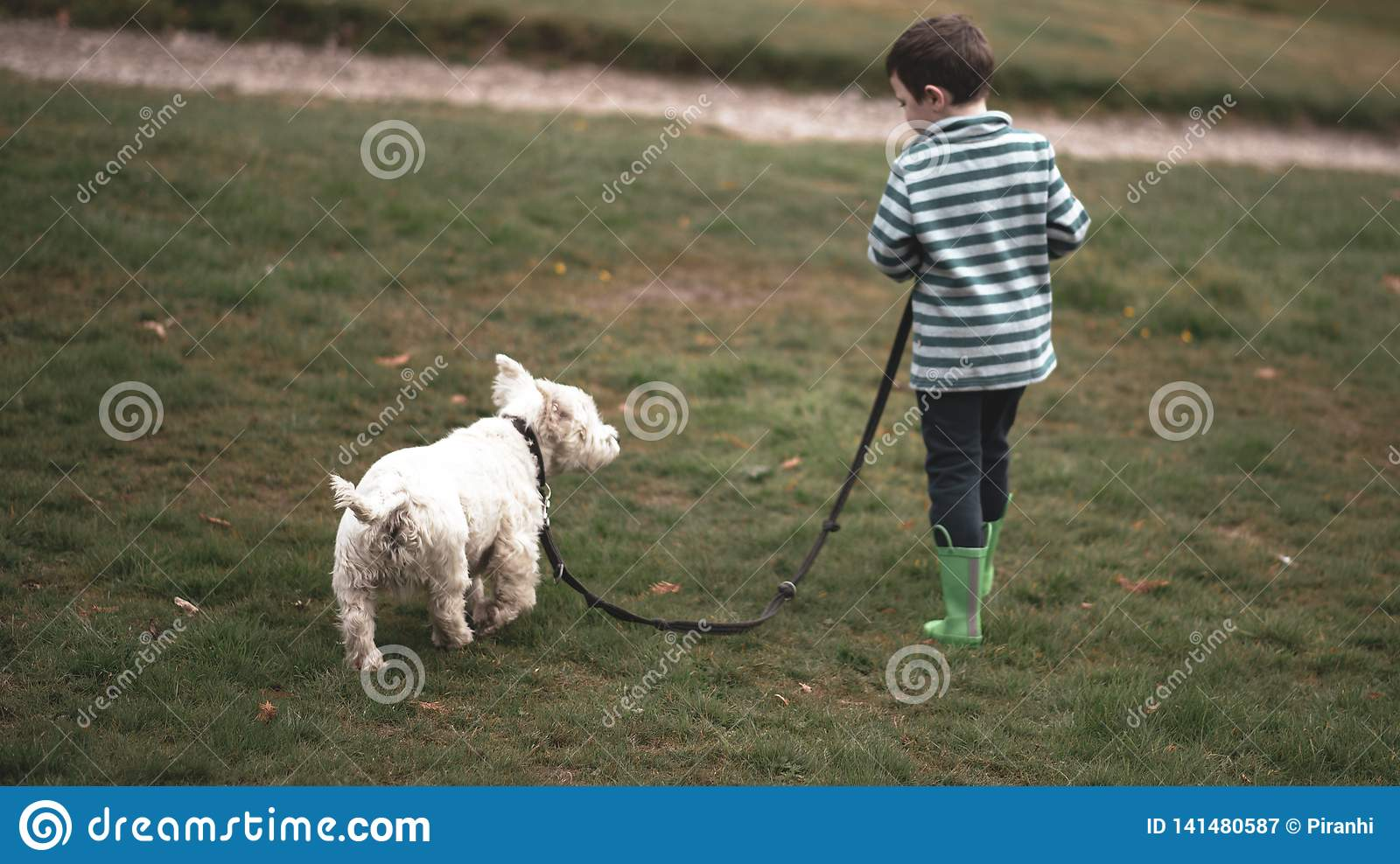 A small boy walks a Westie through a park