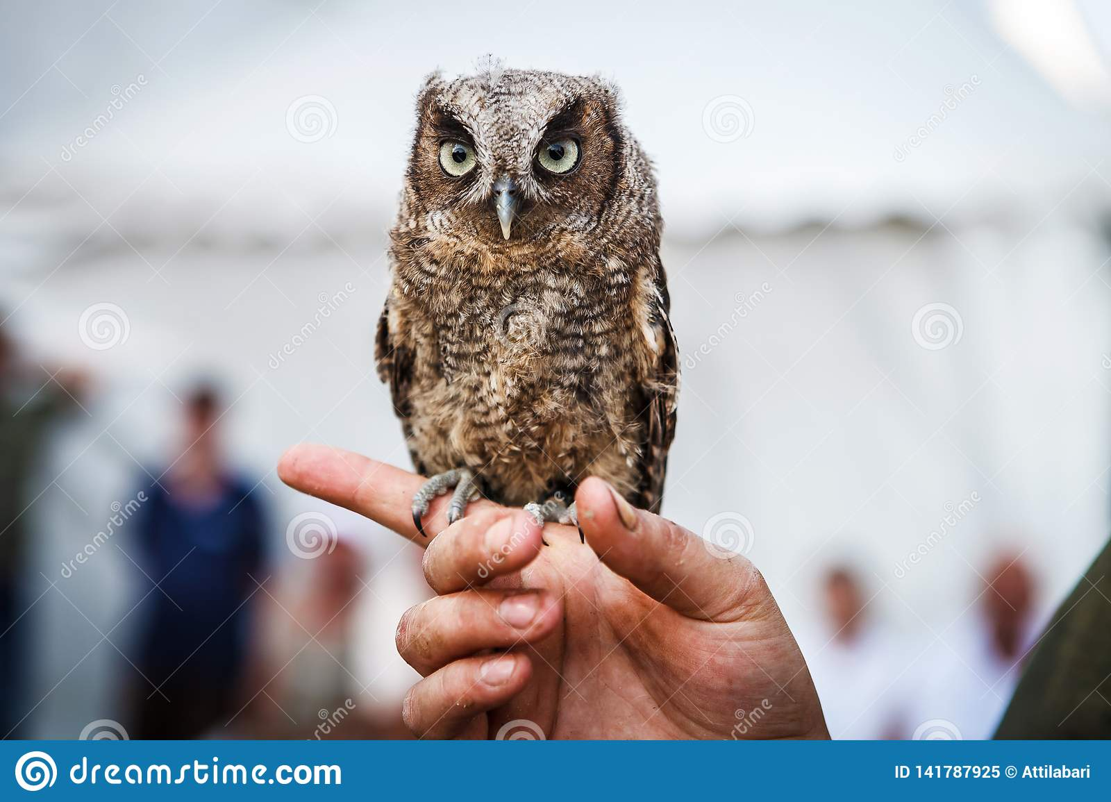 Small brown owl sitting