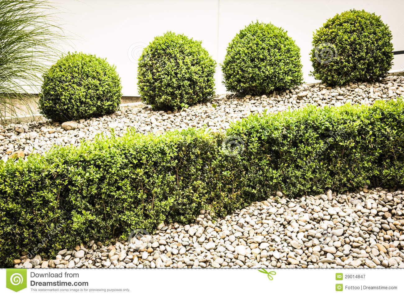 Front yard garden plants - Small Bushes Royalty Free Stock Photography Image 29014847