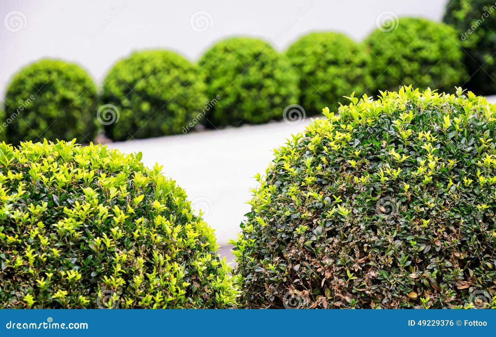 Small bushes stock photo image 49229376 for Small bushy trees