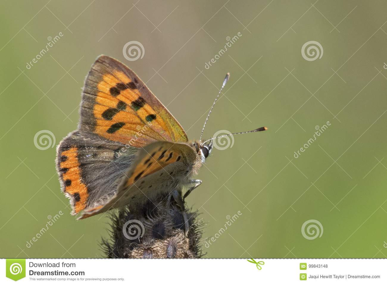 Small butterfly on seed head