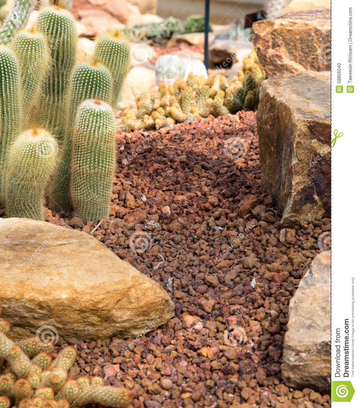 Small cactus and flower blooming in the garden