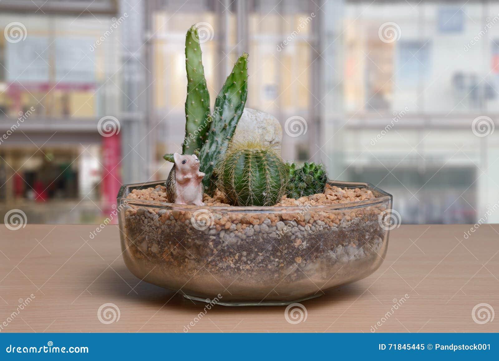 Small Cactus Garden On Table Near Window.