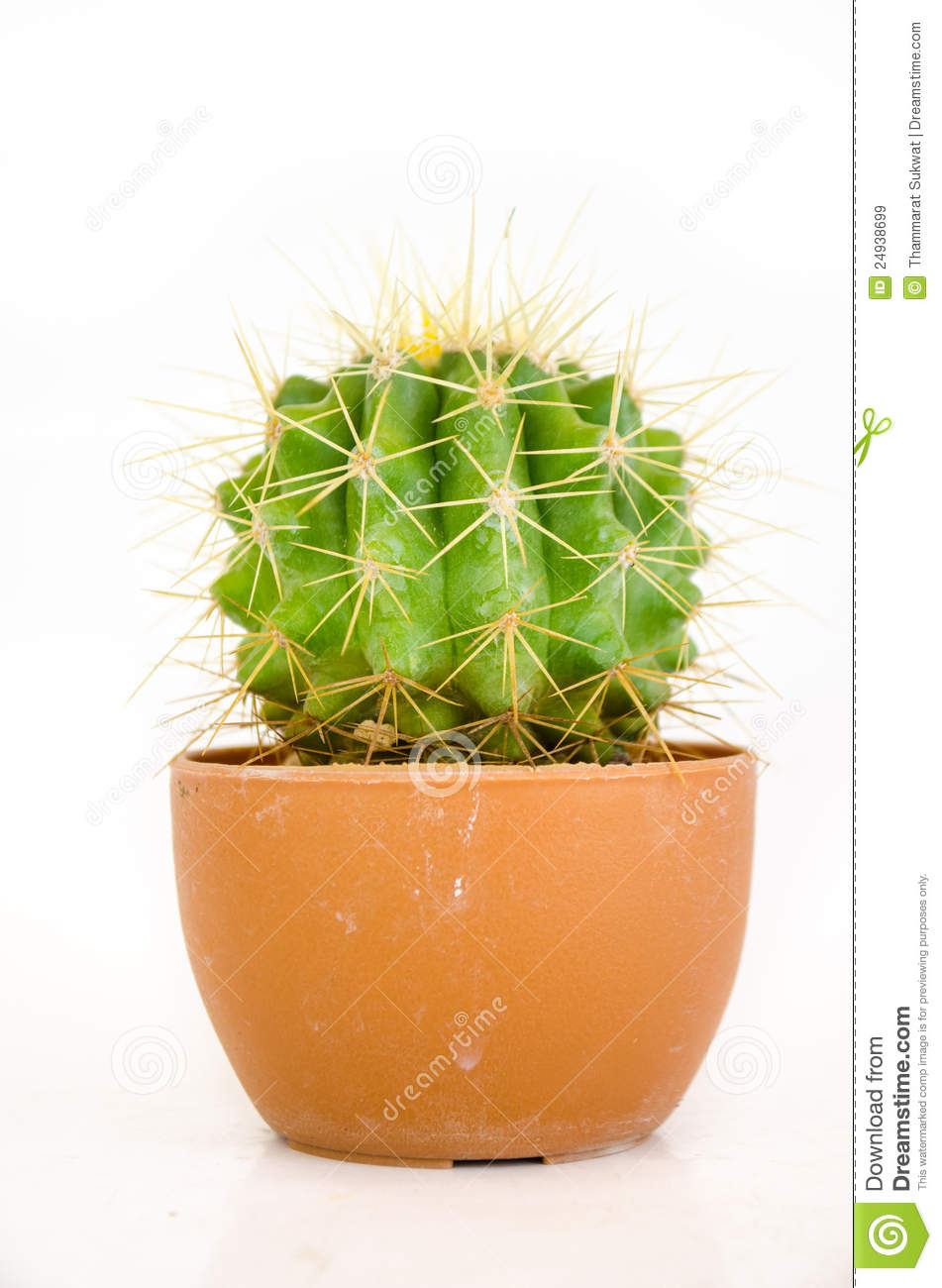 Small Cactus In Pot Royalty Free Stock Images - Image: 24938699