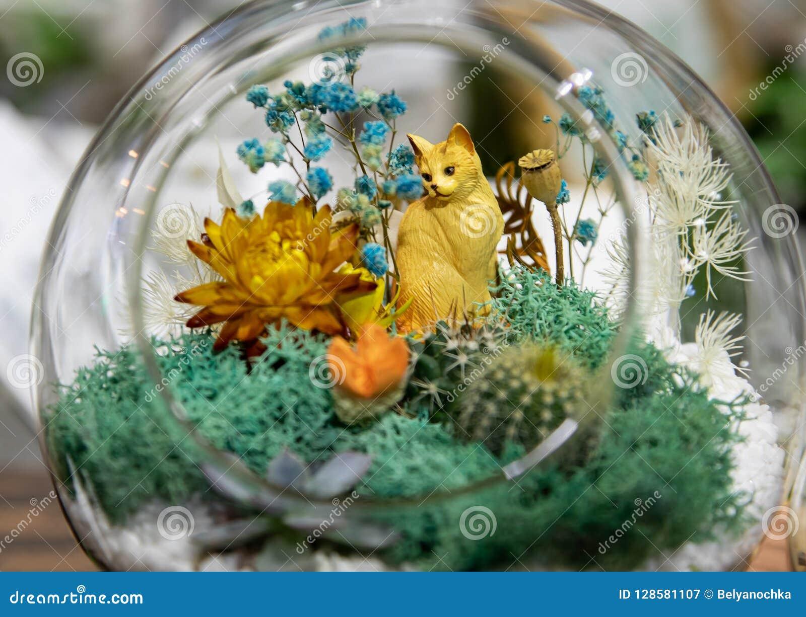 Small Cactus Succulents In Glass Terrarium Stock Image Image Of