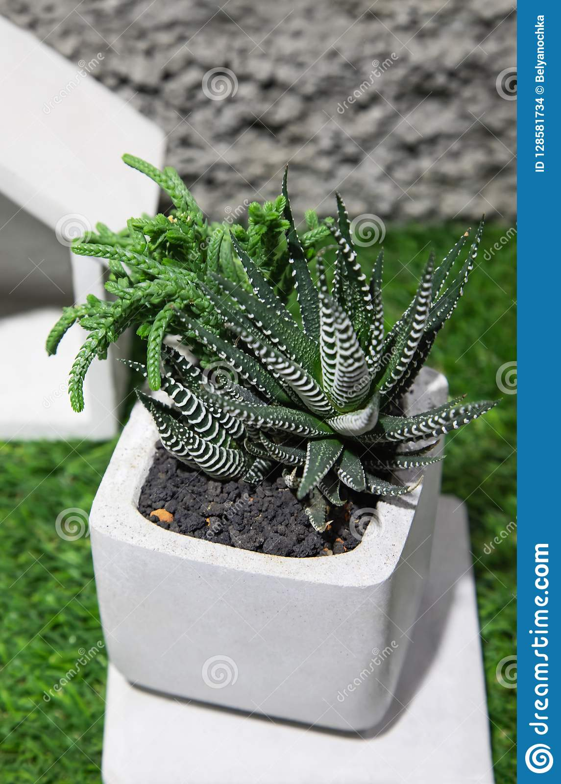Small Cactus Succulents In Pot Stock Photo Image Of Outdoor Gardening 128581734
