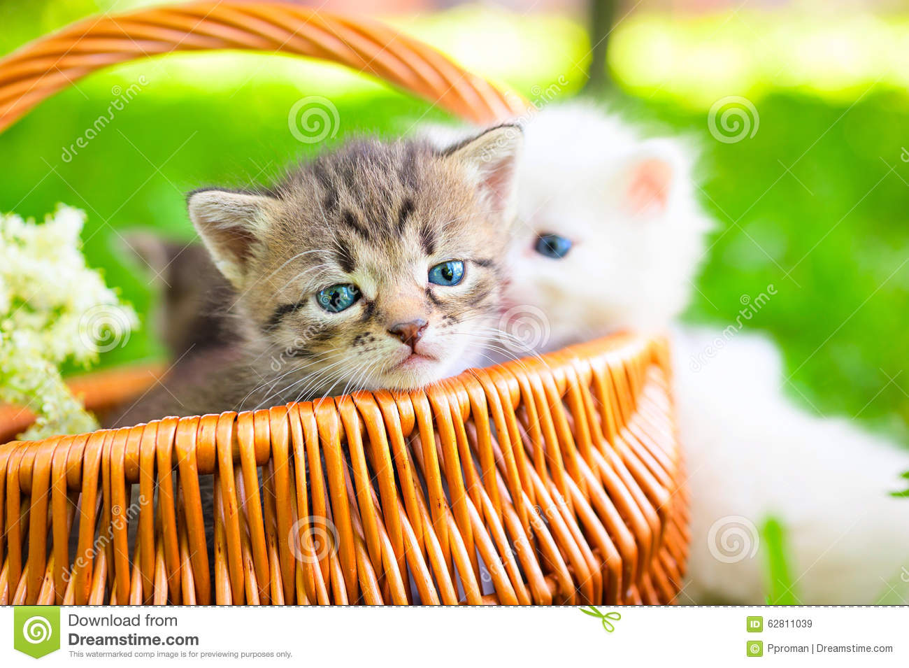 Small Cat On Grass Stock Photo - Image: 62811039