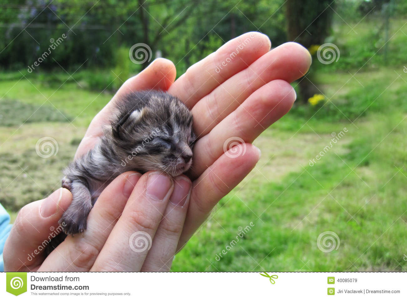 Free photo: Kitten, Small, Cat, Cute, Young - Free Image on ...