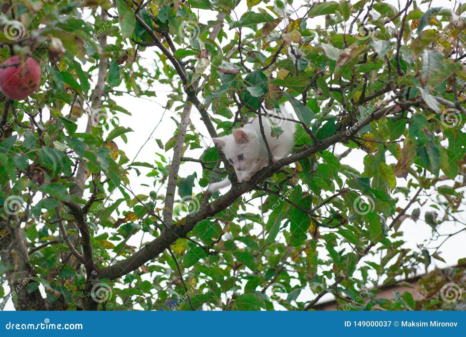Small cat on tree closeup