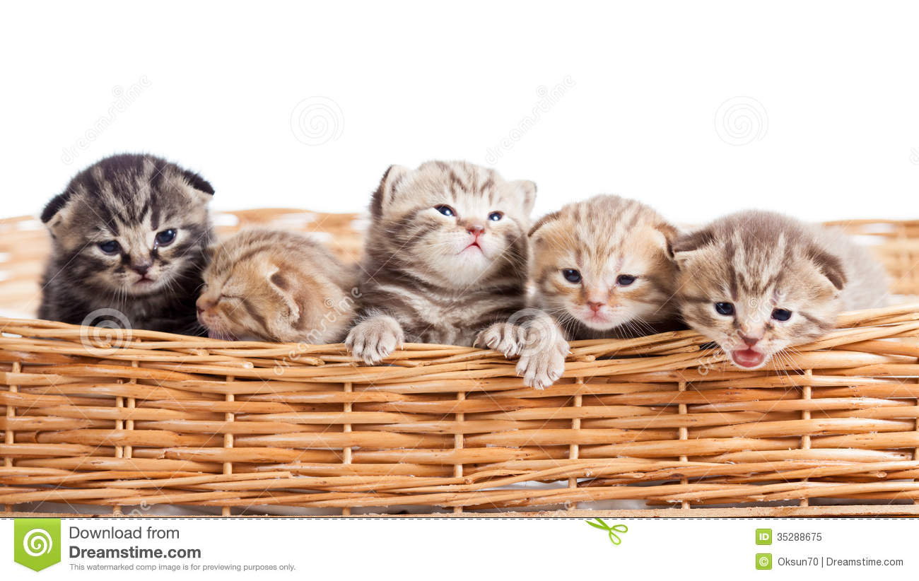 Cat Basket Clipart : Small cats kittens in basket royalty free stock photo