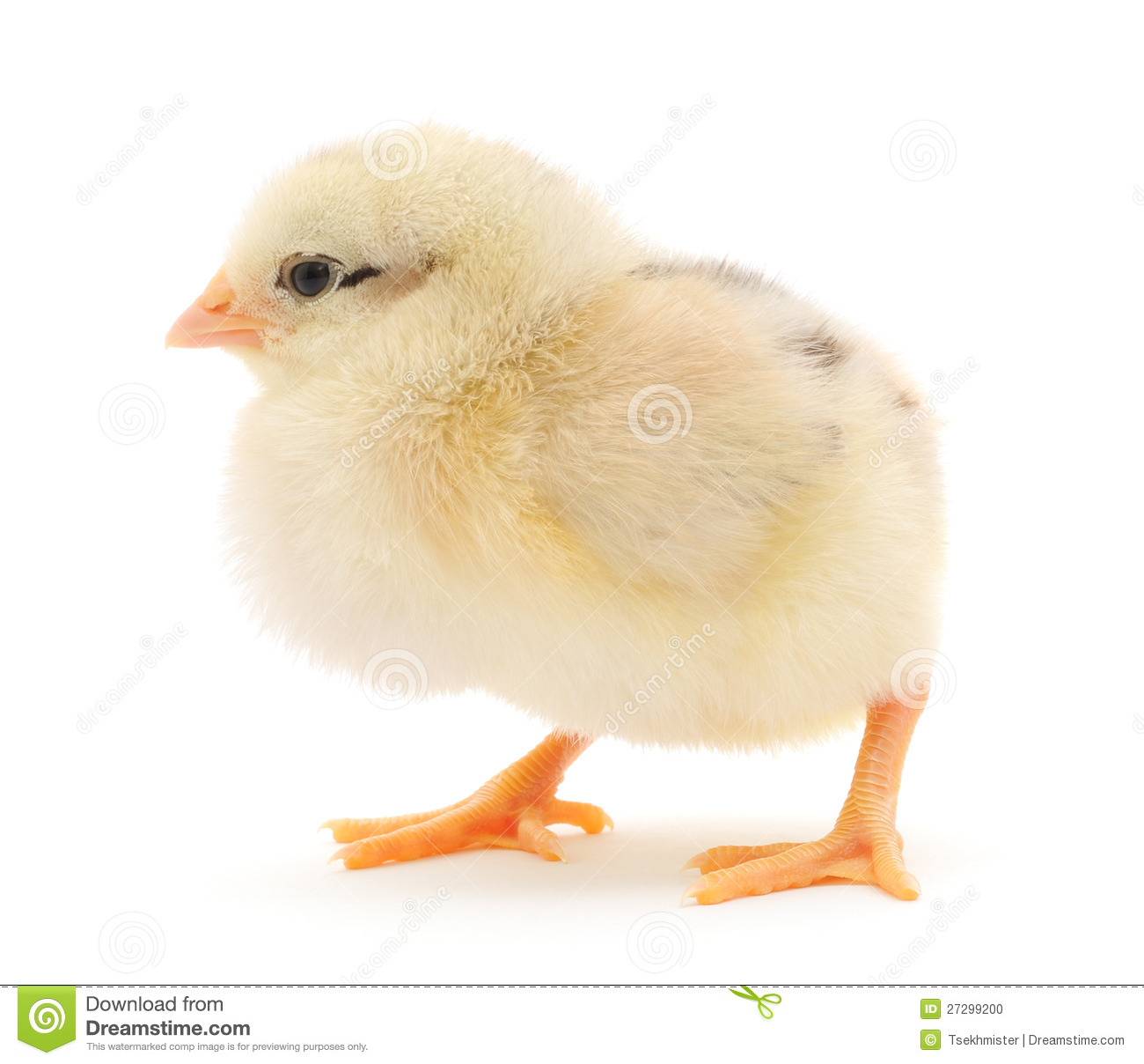 Small Chicken Stock Photo - Image: 27299200